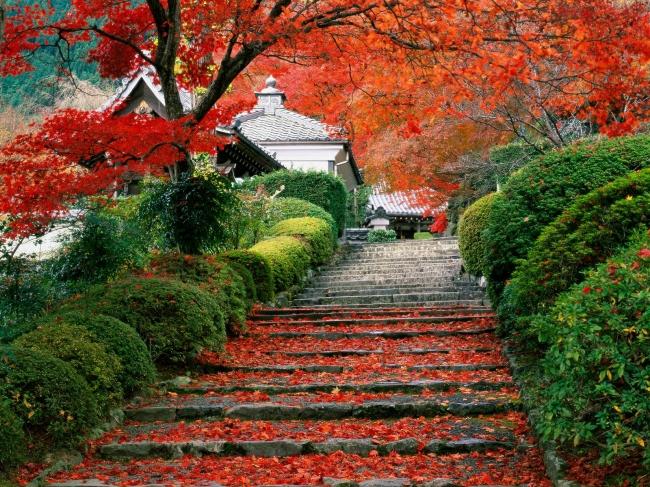 VIAJES A JAPON, TIERRA DEL SOL NACIENTE - Buteler Viajes