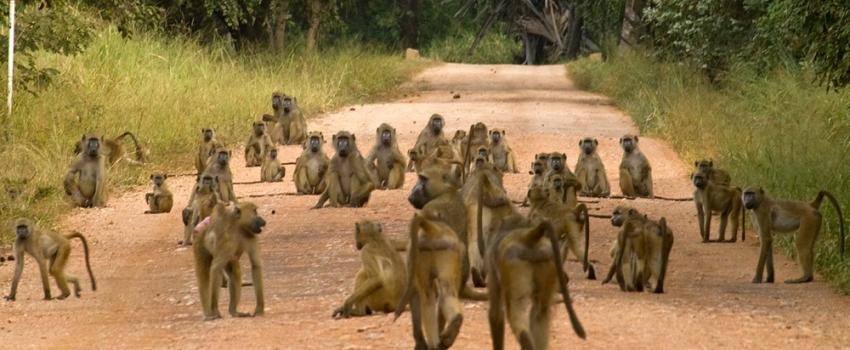 SALIDAS GRUPALES A SUDAFRICA DESDE BUENOS AIRES - Buteler Viajes
