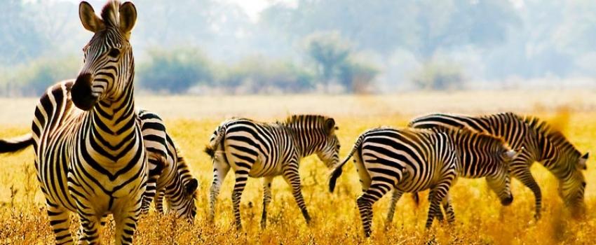 SALIDA GRUPAL A SUDAFRICA, ZIMBABUE Y BOTSUANA - Buteler Viajes