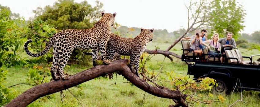 VIAJES A SUDAFRICA DESDE ROSARIO, MENDOZA, SALTA, CORDOBA, JUJUY Y BUENOS AIRES - Buteler Viajes